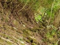 Cranford - Maskehorne Hill hike1