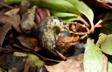 Cranford - Maskehorne Hill hike (crab)