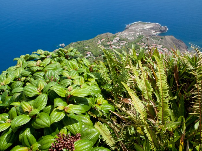 Cranford - Saba, Atop Mt. Scenery