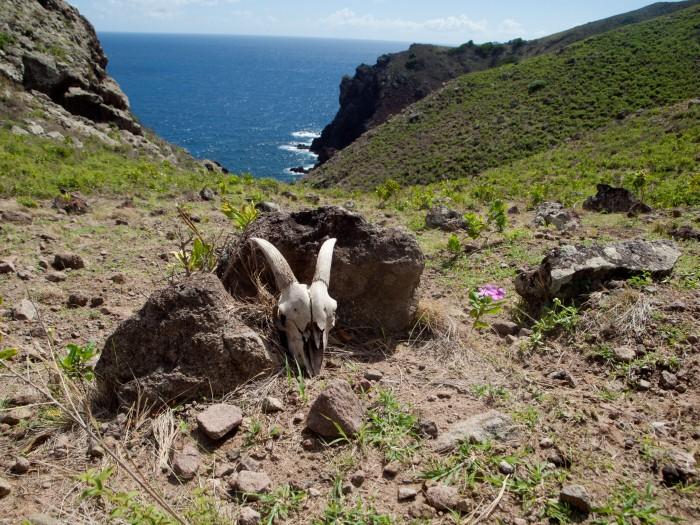 Cranford - Skull from Saba Heritage Trail